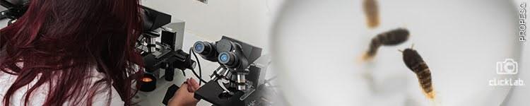 Laboratório de Biotecnologia Aplicada à Parasitas e Vetores - LAPAVET2.jpg